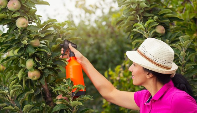 Kaip apsaugoti augalus nuo ligų ir kenkėjų?